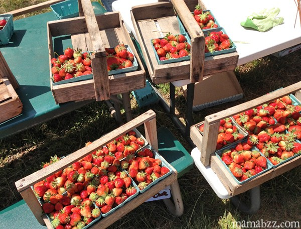 Counting-up-our-strawberries