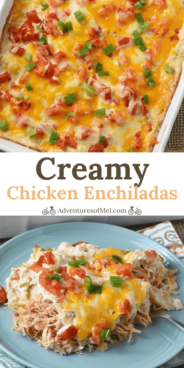 Creamy Chicken Enchiladas Recipe