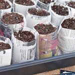 DIY Seed Starting: A Family Affair