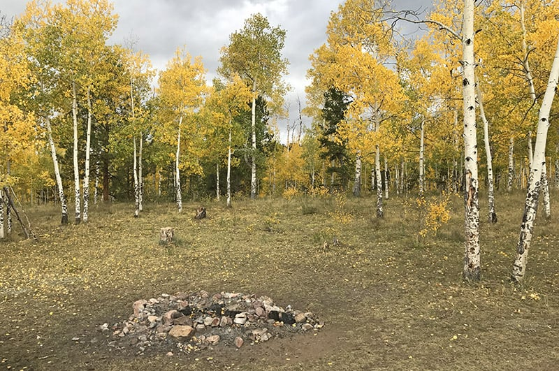 fire ring in national forest camping site in Colorado amongst golden aspen trees
