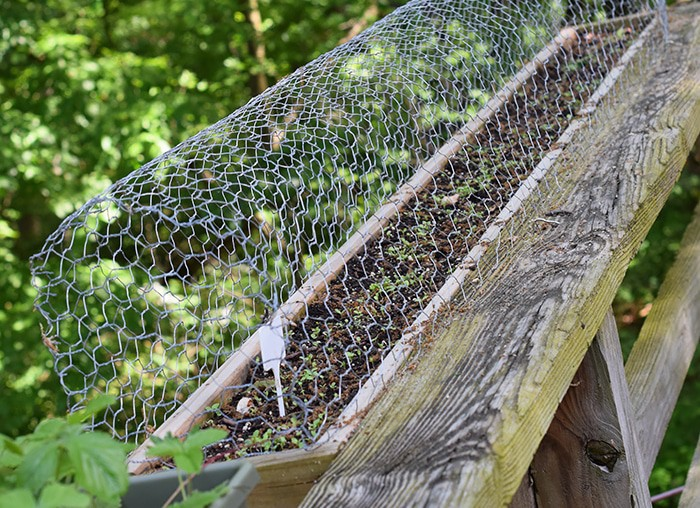 Squirrels eating your tomatoes, strawberries, and just making a mess out of your garden? A simple solution to keep squirrels out of deck rail planters.