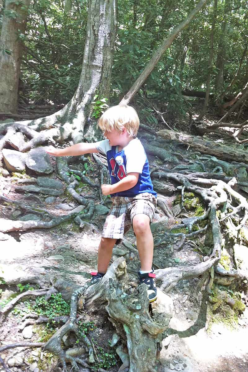 young boy climbing on tree roots in the Great Smoky Mountains, Tennessee