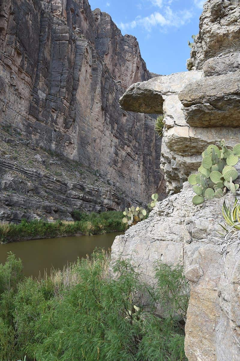 cactus growing on the sides of Santa Elena Canyon in Big Bend National Park