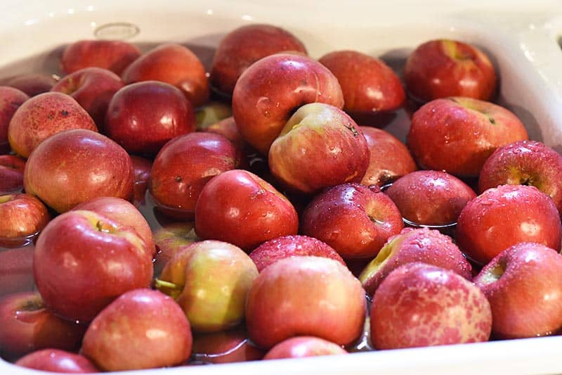 wash apples before making applesauce, Jonathan apples in sink full of water