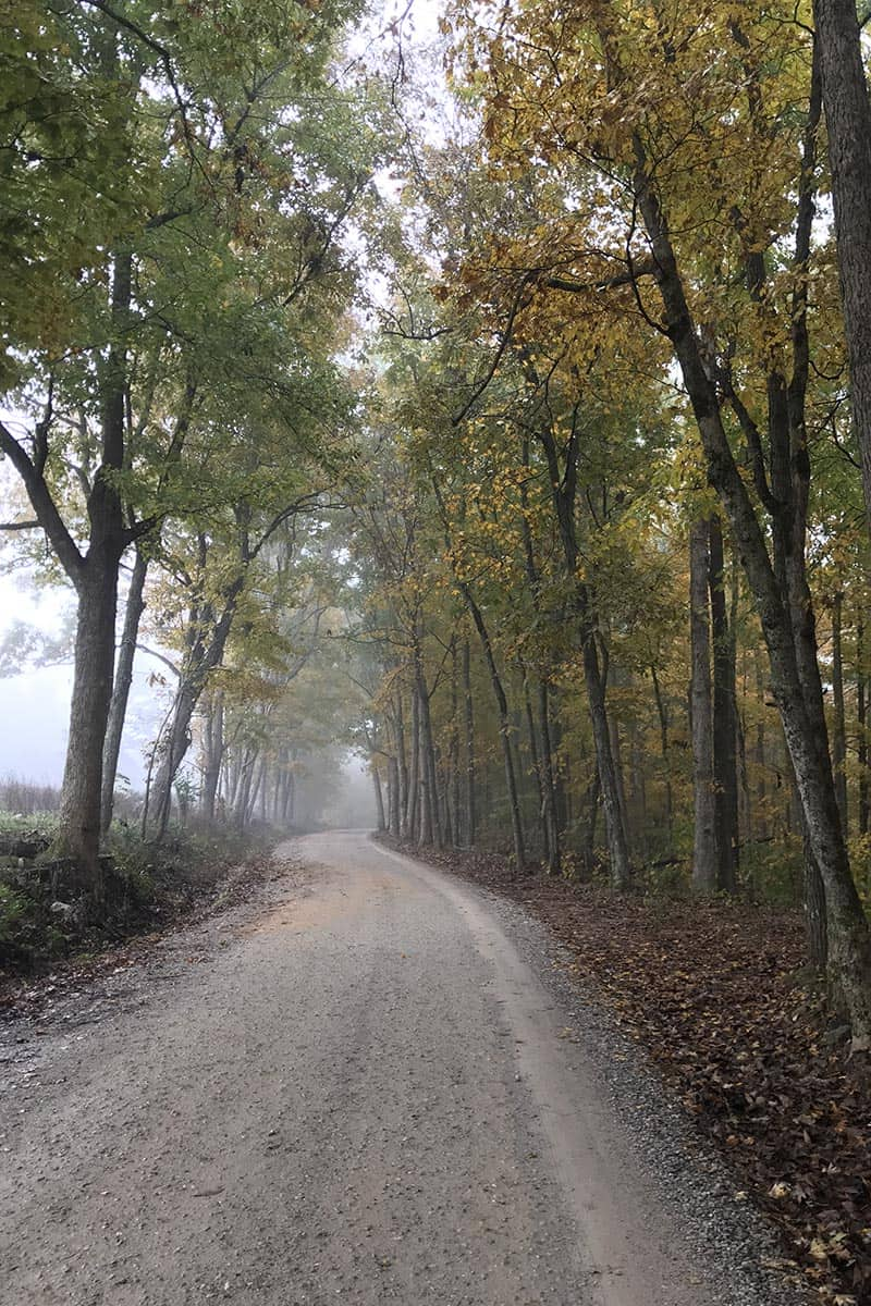 foggy autumn road, Cave Mountain Road to Hawksbill Crag Trailhead near Ponca, Arkansas