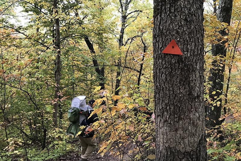 Hawksbill Crag Trail markers to guide hikers along on the trail to Whitaker Point in the Ozark National Forest