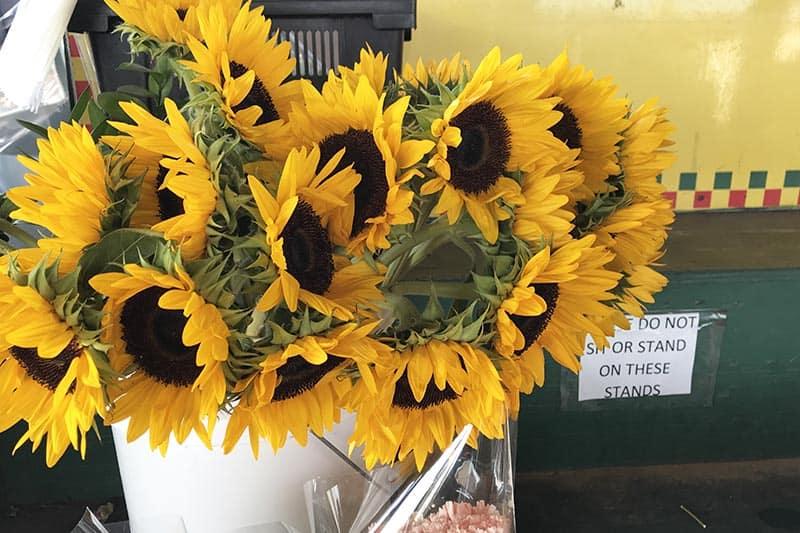 sunflowers from Soulard Florist at Soulard Market in St. Louis