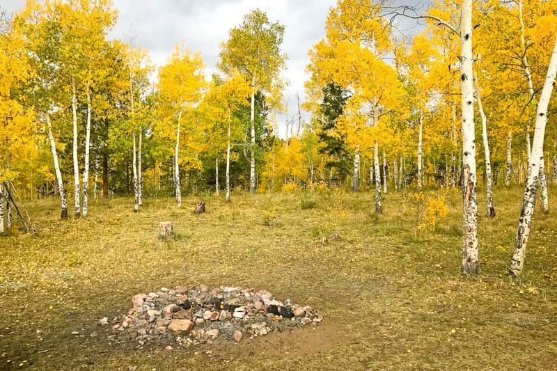 national forest camping in Colorado with fire ring in golden aspen trees